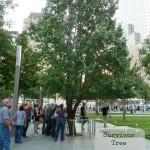 Survivor Tree 9-11 Memorial