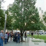 Survivor Tree 9-11 Memorial
